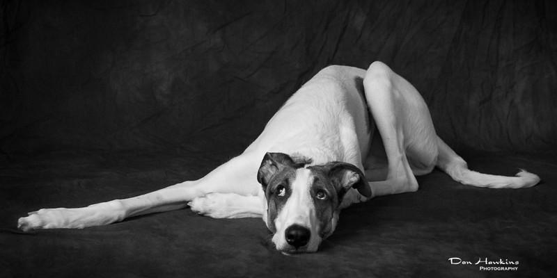 emily-mason-pets-2014-0446.jpg