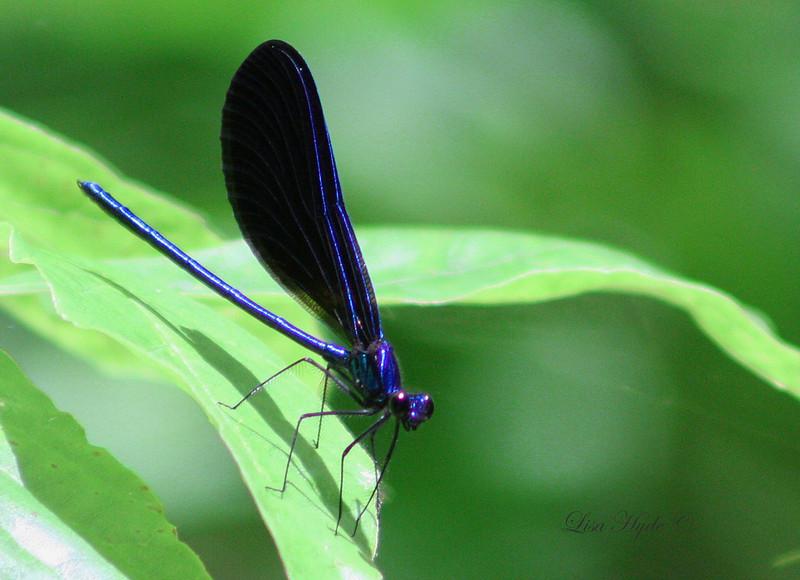 Dragonfly signed.jpg