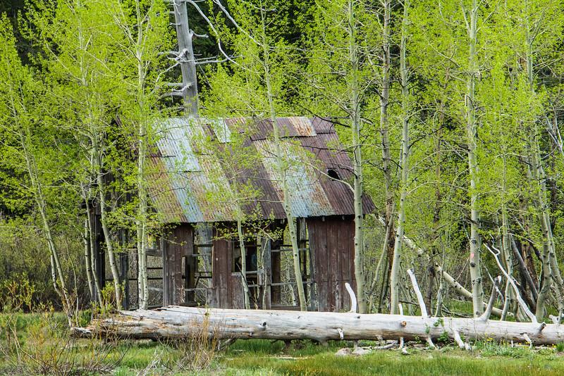 Aspen Cabin.jpg