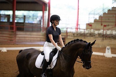 Horse 456