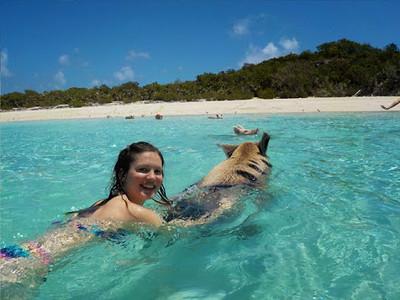 bahamas-swimming-pigs8.jpg