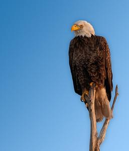 Various Birding Outings - Mar & Apr, 2013