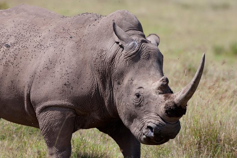 Rhino _MG_8370.jpg