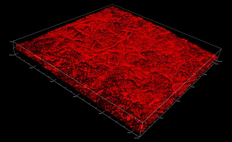 Malaya Straits Settlements 2c striated paper surface reflectance confocal microscopy