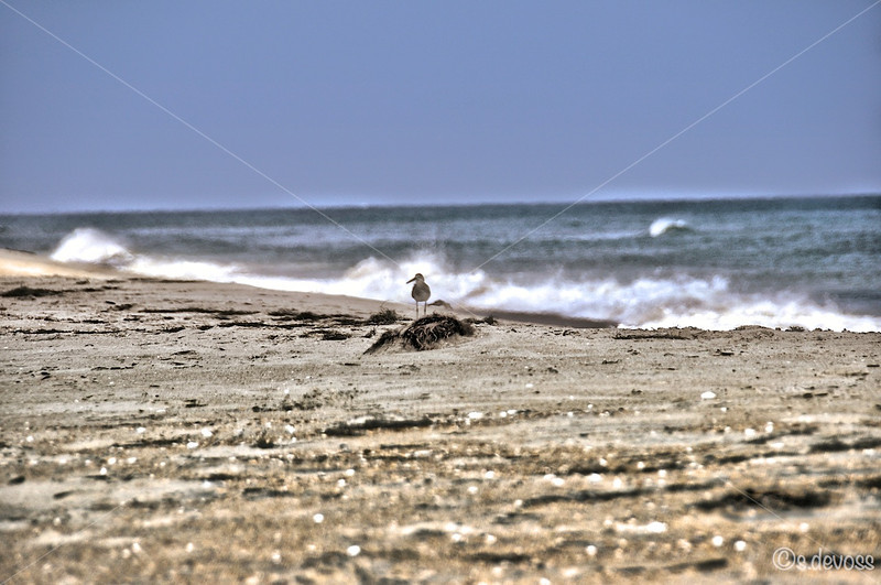 beachPeaislandHDR_0304 Wmark.jpg