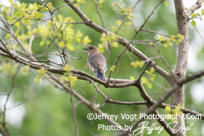 05/05/2018 Blue Marsh Nature Trail, Nature and Wildlife Photos, Gaithersburg Maryland, Photography by Jeffrey Vogt