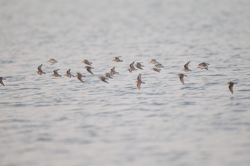 - Ameenpur Lake, Hyderabad, India