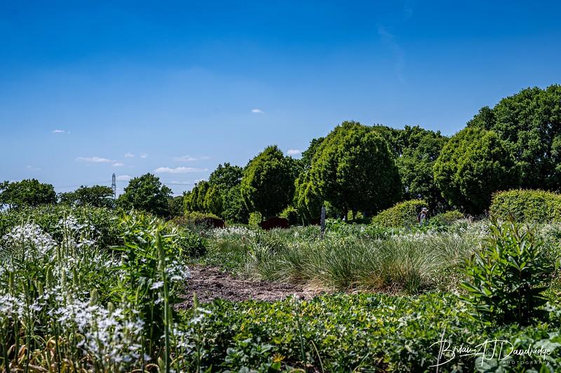 Sussex Prairie Gardens Z6-3723.jpg