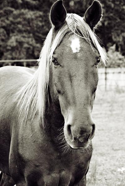 Equine Rescues & Sanctuaries