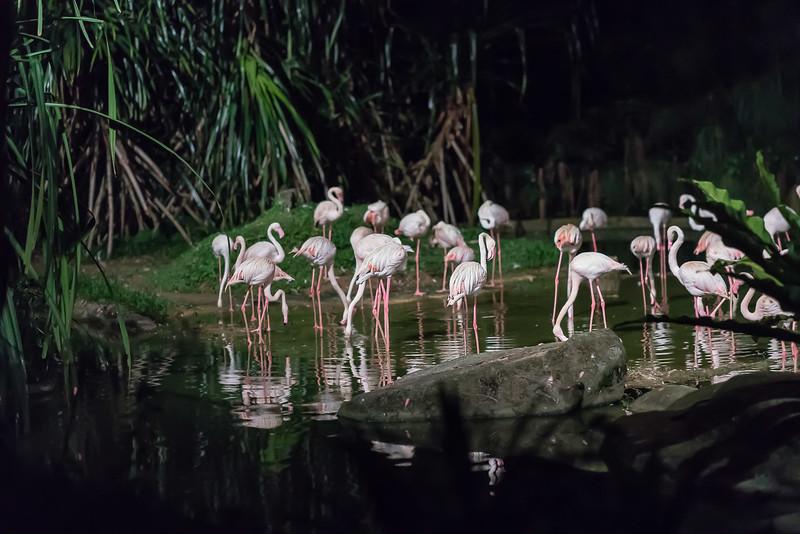 Night-Safari-9552.jpg