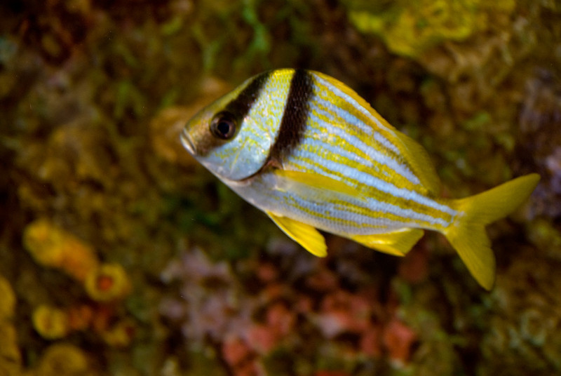 fish2_0168.jpg
