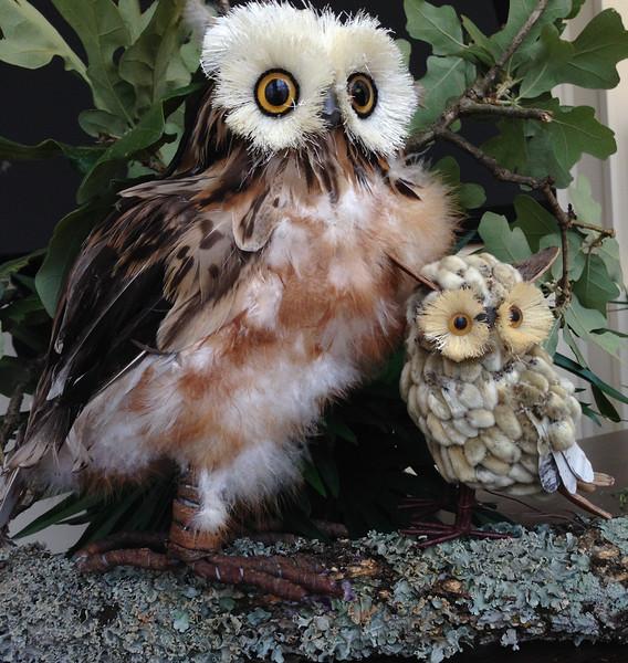 Ginger's owls