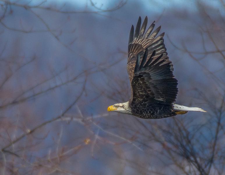 smug eagle 7.jpg