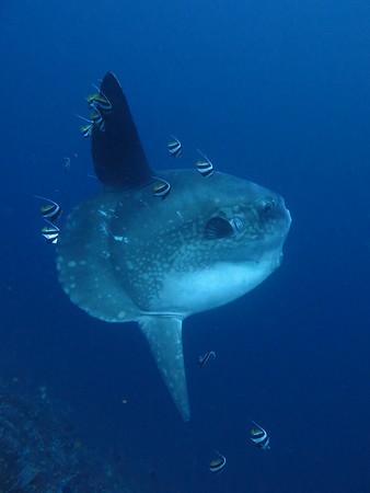 Nusa Penida Underwater