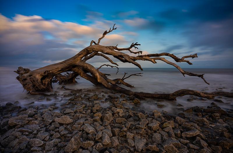 Driftwood_1.jpg