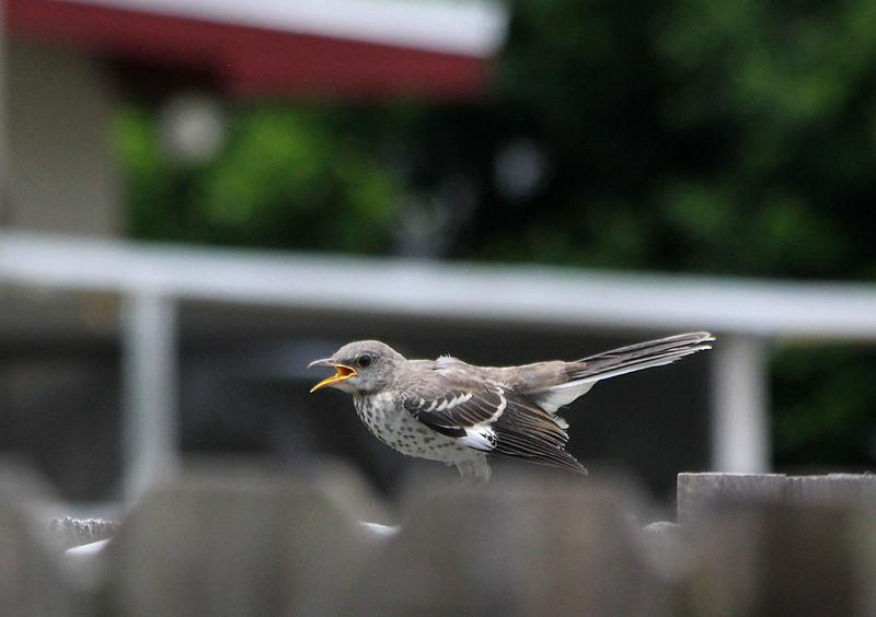 BirdJune23#5007.jpg