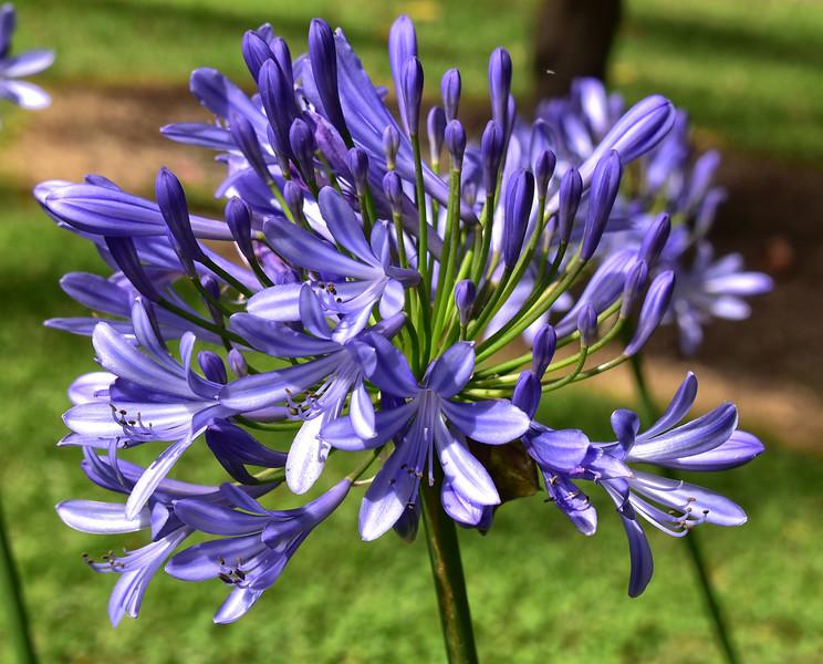 ECQ_0485-Flowers.jpg