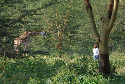 Naivasha Simba Lodge (83883368).jpg
