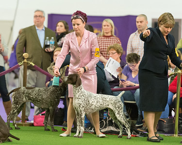 GCH CH Rose Mountain's Stelor Gunpowder and Glitz
