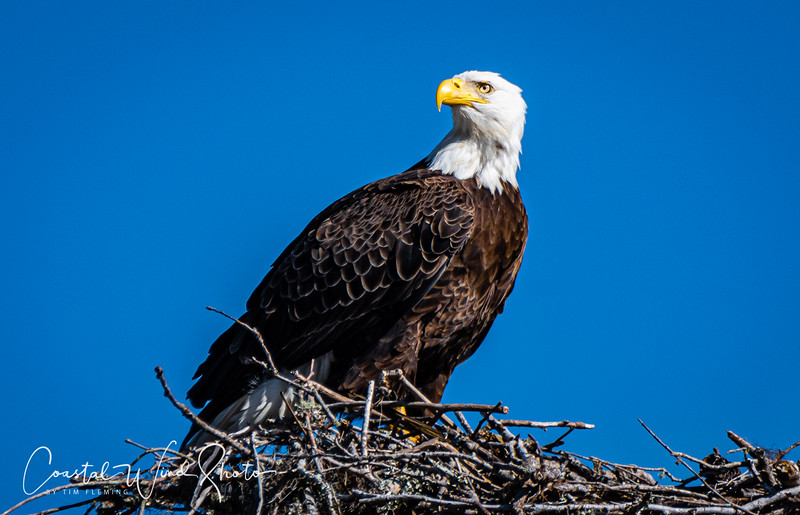 Bald Eagle Causeway 1 121120-.jpg