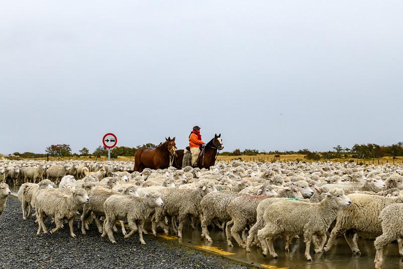 20190415__KET3154_Sheep and Vaqueros9523.jpg