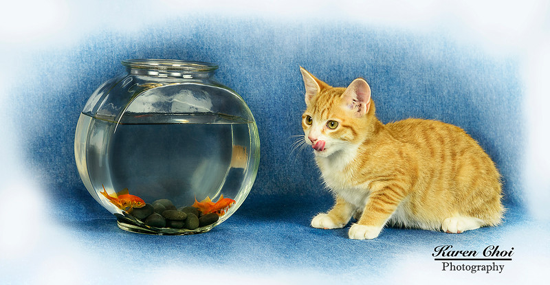 Cat licking his lips at the fish 2 sm.jpg