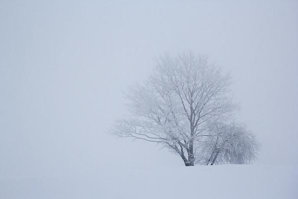 Mount Pleasant, Ithaca