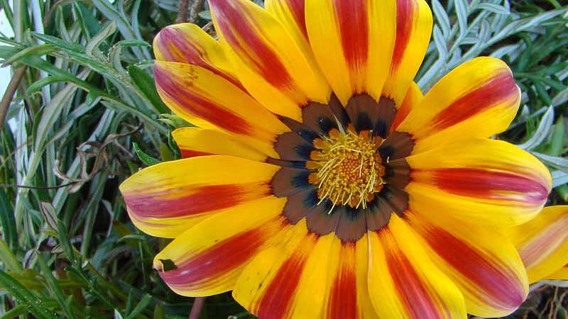 Flowers2 1920x1080 (44).jpg
