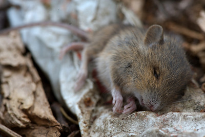 The Decomposition of Mr. Mouse