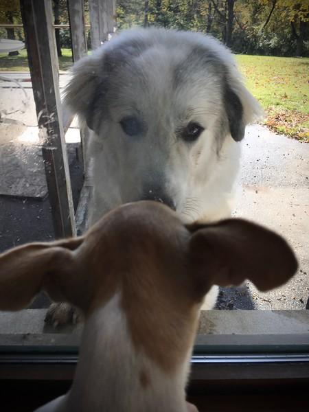 Remi meeting Atlas