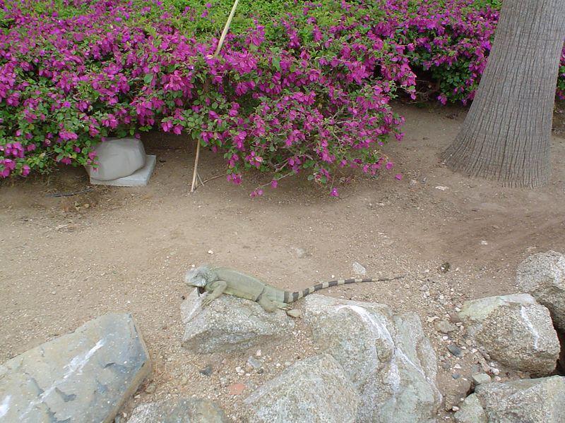 Aruba 2005 004.jpg
