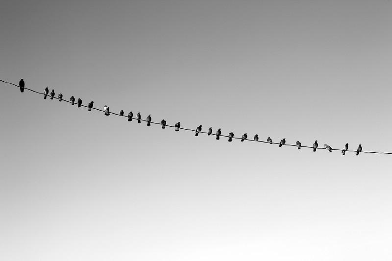 Online Networking