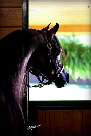 Gemini Acres Equine