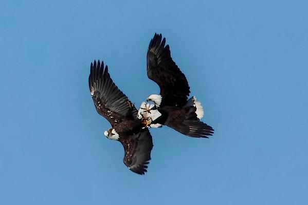 Eagles 2008 & 2009