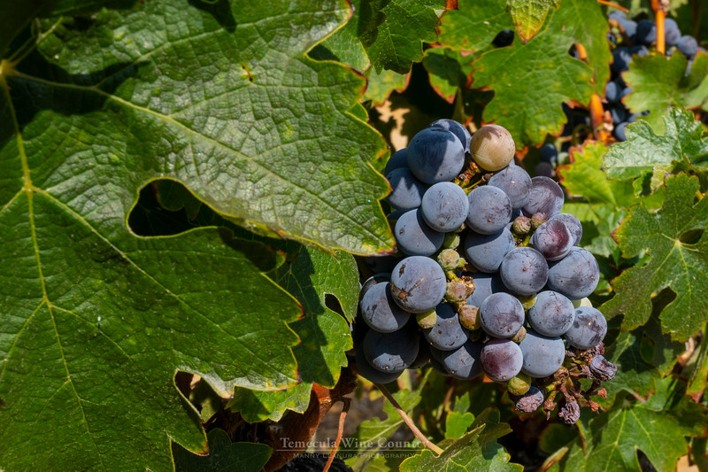 Temecula Wine Country - Leoness Cellars