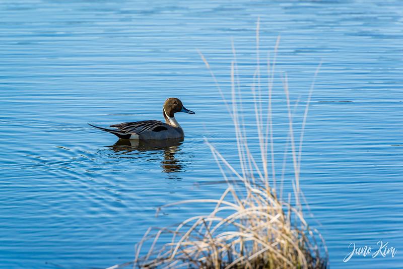 2020-05-12_Potter Marsh bird-_6109450-Juno Kim.jpg