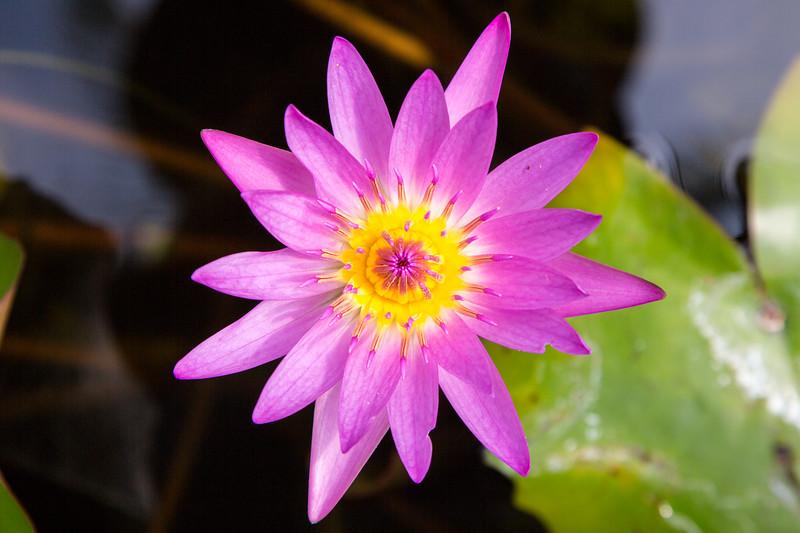 Hawaii - 061312 - 056.jpg