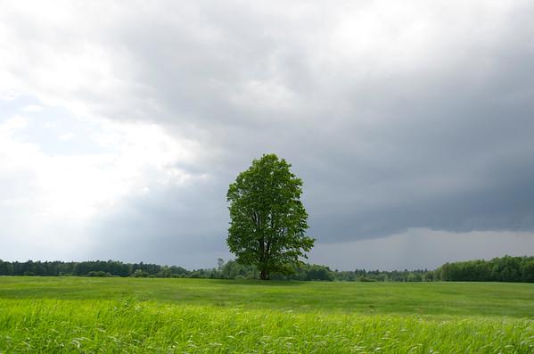 Mill Pond Tree