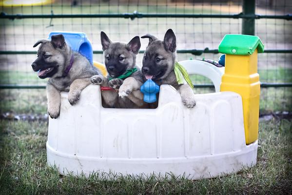 2012-09-11 Puppy Play Pics