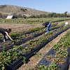 NATIVE AMERICANS VISIT ADDWATER FARM IN PESCADERO TO LEARN SUSTAINABLE FARMIING PRACTICIES