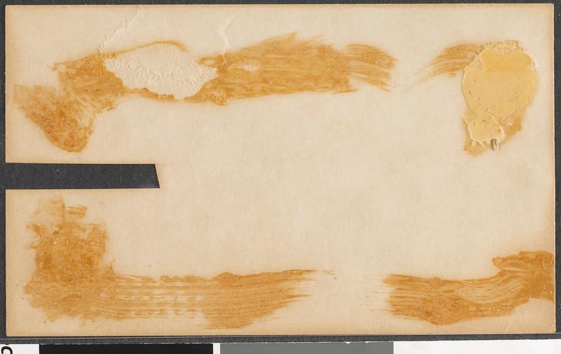 rbm-a-rozsa-box2-lis-11