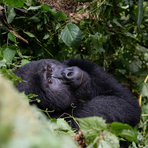 Uganda_T_Gor-1280.jpg