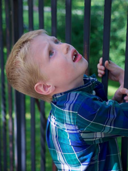 David's Photos_Public Gardens 2013 _1120006.jpg