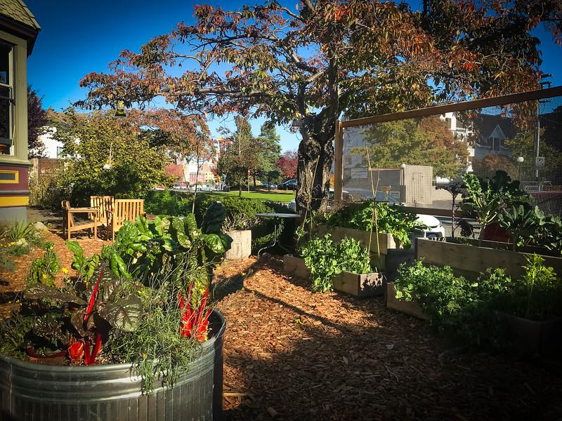 nourish garden 2.jpg