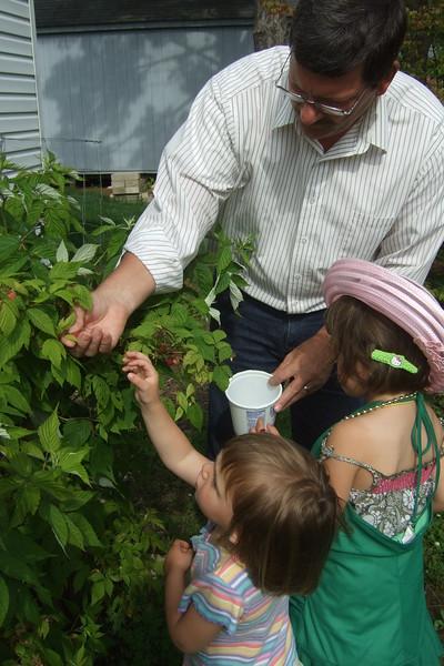Raspberry picking with Grandpa.