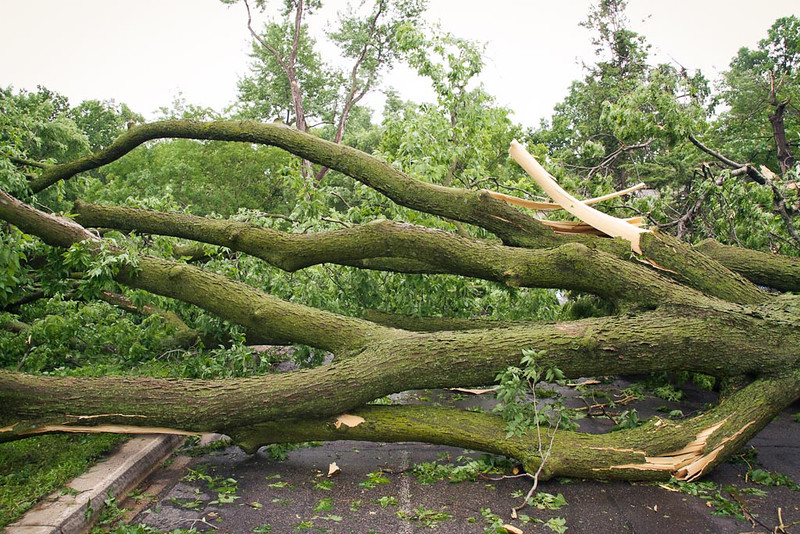 . A huge tree extends over Dean Parkway in Minneapolis. (Photo: Ryan Coleman)