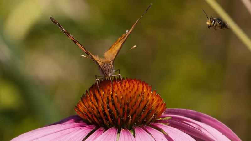 Photobombed by Bee