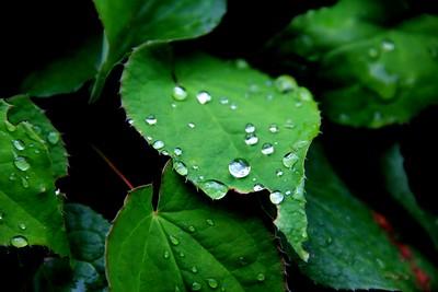Green Earth!