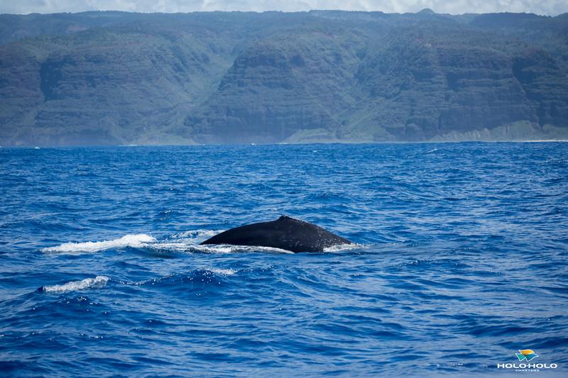 whales-leila-71.jpg