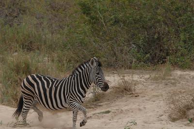 7-14-2015 Leopard Hills Bush Breakfast & Cubs